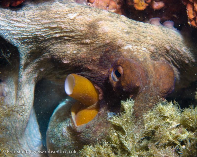 xlendi tunnel gozo octopus